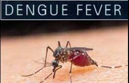 Dengue Fever Cases in Auckland on the Rise
